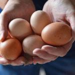 Αυγό, φίλος ή εχθρός